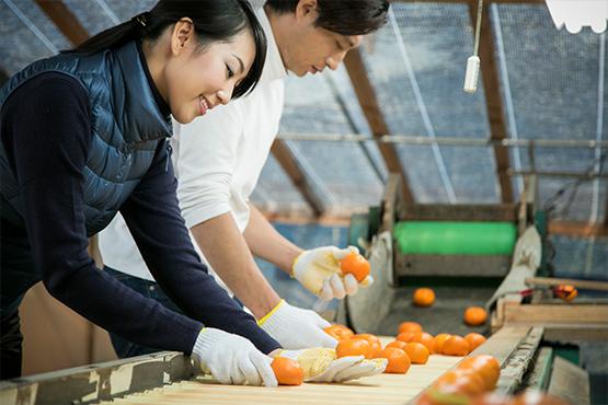 軽作業(ピッキング、仕分け、梱包等)の人材派遣
